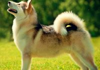 Hond borstelen tips