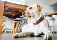 Hoeveel honden zijn er in Nederland?