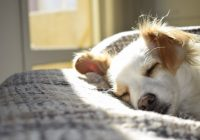 Hoe zit het bij een hondenverzekering met de inentingen