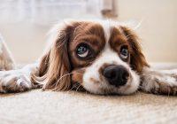 Spullen die je sowieso voor je hond moet hebben